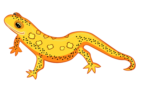 Triton East American red spotted salamanders smiling yellow vector illustration