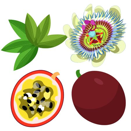 Passion flower blue fruit maracuya. Illustration