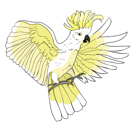 Isolated illustration of Cockatoo yellow white wings on white background flying Vector illustration