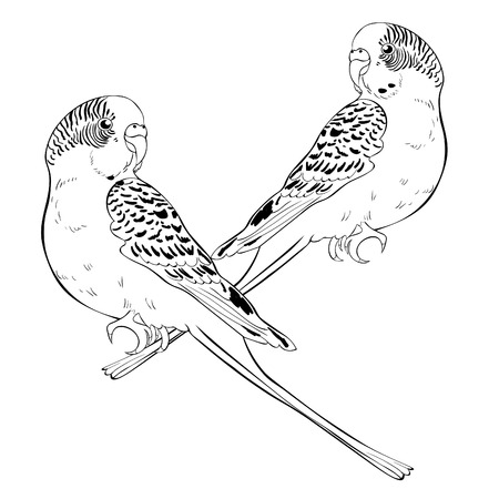 Isolated illustration of coloring with cute wavy parrot couple .Vector illustration