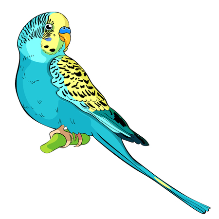 Yellow face blue wavy parrot  Vector illustration on white background.