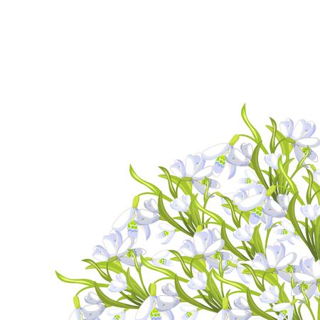 corner snowdrop flower blossomed with leaves. Vector illustration Illustration