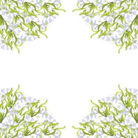 frame corner  snowdrop flower blossomed with leaves Vector illustration