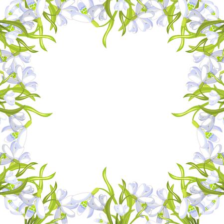 frame snowdrop flower blossomed  Vector illustration