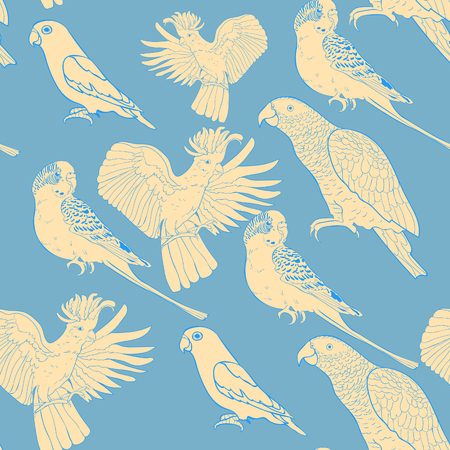 periquito: Patrón sin fisuras Jaco, Lovebird, loro ondulado kakadu ilustración vectorial
