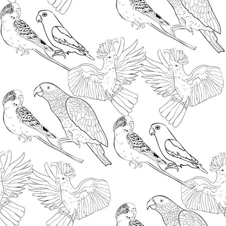 Seamless pattern coloring Jaco, Lovebird, wavy parrot kakadu Vector illustration