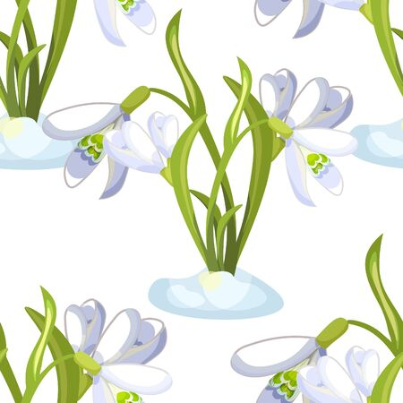Seamless pattern snowdrop flowers  blossomed with leaves Vector illustration