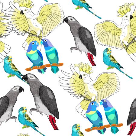 Seamless pattern with Jaco, Lovebird, wavy parrot kakadu Vector illustration