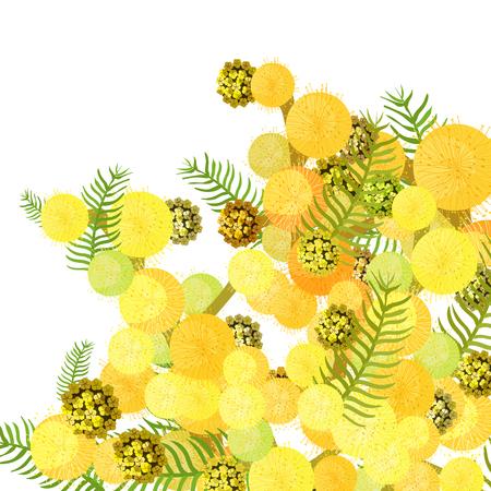 Niederlassung silbriger gebleichter Ecke der Mimosenakazie Vektor-Illustration