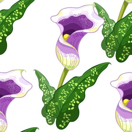 seamless pattern calla Picasso of flower purple Vector illustration Illustration