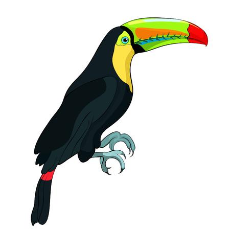 Toucan a rainbow exotic bird Vector illustration