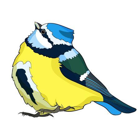 blue tit  plump bird, looking up vector illustration