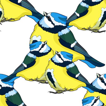 seamless pattern blue tit  plump bird, looking up vector illustration