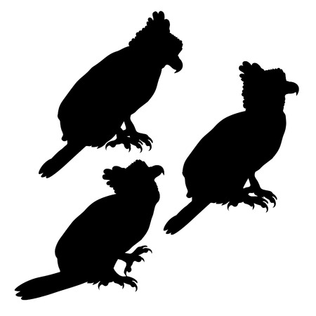 set silhouette harpy bird in profile. vector illustration Ilustração