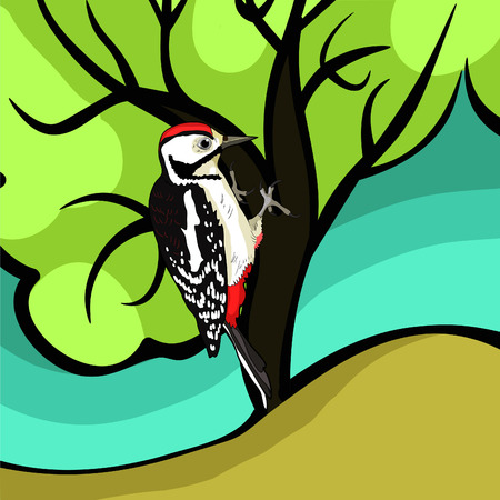 the great spotted woodpecker young on tree vector illustration Illustration