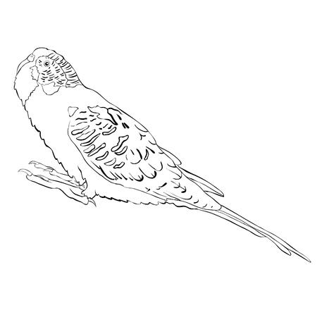 kleuren met schattige golvende papegaai. Vectorillustratie Stock Illustratie