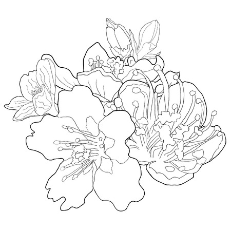 Coloring flowers of the almond blossoms a nut. vector illustration
