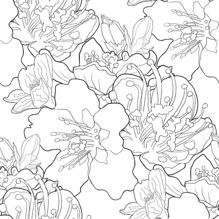 seamless pattern coloring flower of the almond blossoms a nut. vector illustration Ilustracja
