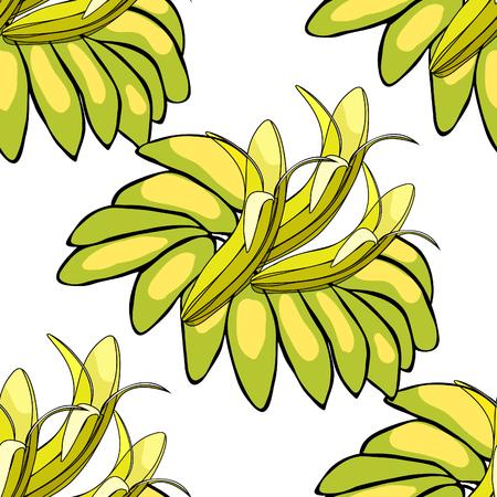 Seamless pattern banana India exotica vector illustration Illustration