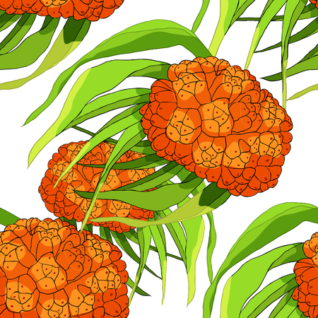 Seamless pattern pandan is an exotic fruit of Thailand vector illustration Illustration