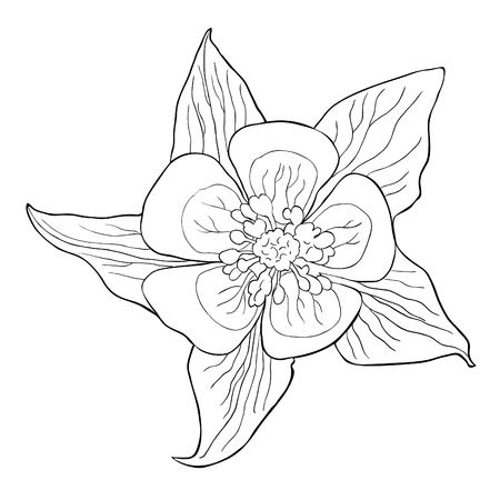 Coloring the aquilegia flower is blooming vector illustration Illustration