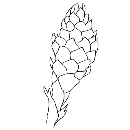 Tropical flower ginger coloring torch  vector illustration 일러스트