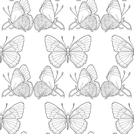 coloring seamless pattern Diaethria clymena Butterfly  vector illustration Иллюстрация