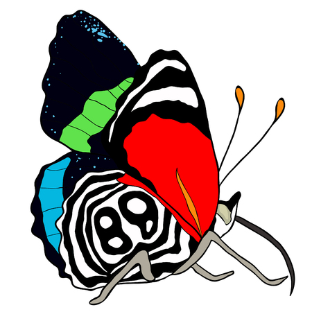 Diaethria clymena Butterfly is tropical on side vector illustration Illustration