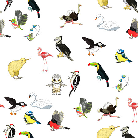 seamless pattern owl, toucan, bluegrass tit, kiwi bird, harpy, bullfinch, woodpecker, swan, hummingbird. vector illustration