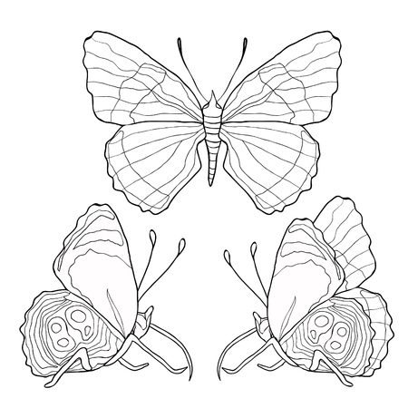 set coloring of  Diaethria clymena Butterfly  vector illustration