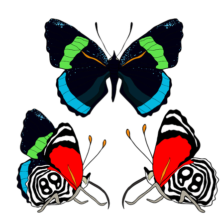 Diaethria clymena Butterfly tropical vector illustration