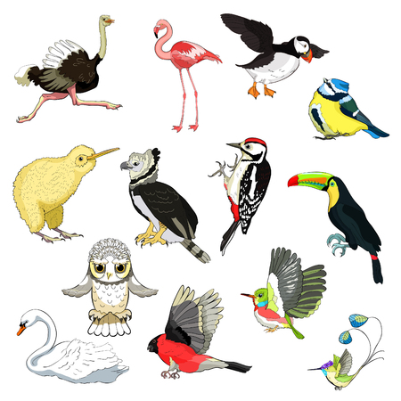 Set of ostrich, flamingo, todi, owl, toucan, bluegrass tit, kiwi bird, harpy, bullfinch, woodpecker, swan, hummingbird. vector illustration