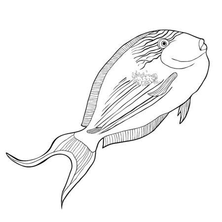 coloring  Arabian surgeon Sohail fish  vector illustration