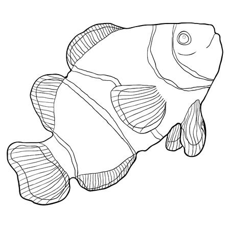 coloração, palhaço, peixe, amphiprienes, exoticas, vermelho, mar, vetorial, ilustração