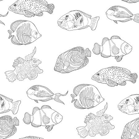 seamless pattern coloring red sea fish Arabian surgeon Sohail, Mandarin, Fish  parrot.  vector illustration