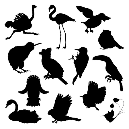 set of silhouette ostrich, flamingo, todi, owl, toucan, bluegrass tit, kiwi bird, harpy, bullfinch, woodpecker, swan, hummingbird. vector illustration Vettoriali