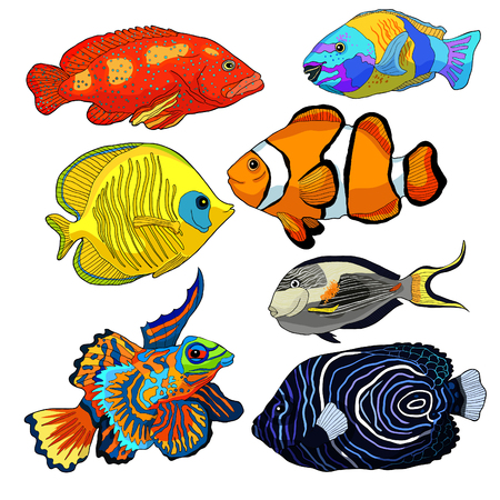 set red sea fish Arabian surgeon Sohail, Mandarin, Fish parrot  vector illustration