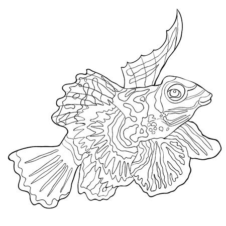 coloring  Mandarin fish is Chinese perch  vector illustration