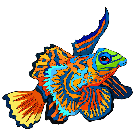 Mandarin fish is Chinese perch  vector illustration