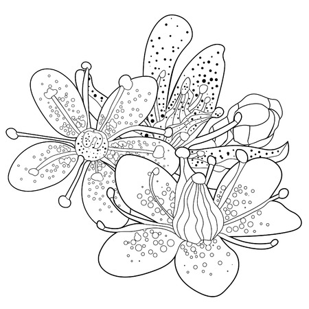 coloring flowers  of the Saxifrage urbrosa  vector illustration