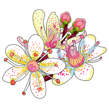 flowers  of the Saxifrage urbrosa  vector illustration Stock Vector - 94776571