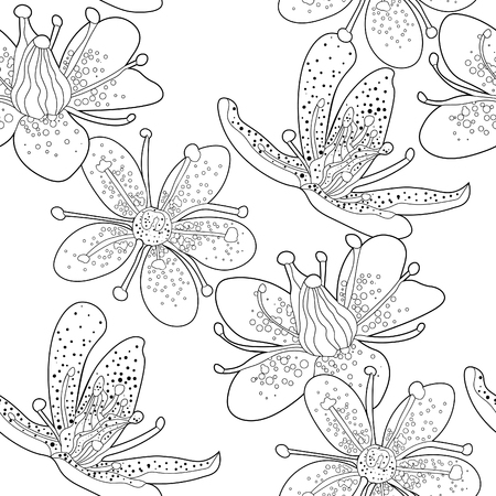 seamless pattern  coloring flower of  Saxifrage urbrosa  vector illustration Illustration