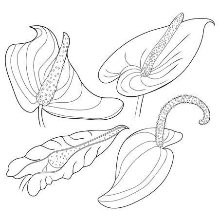 set coloring  is anthurium flower flamingo  vector illustration