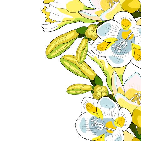 Card flower freesia kind of iris. vector illustration.
