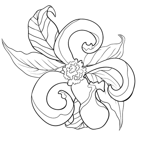 Coloring With Florida Dogwood Flower Leaves Vector Illustration