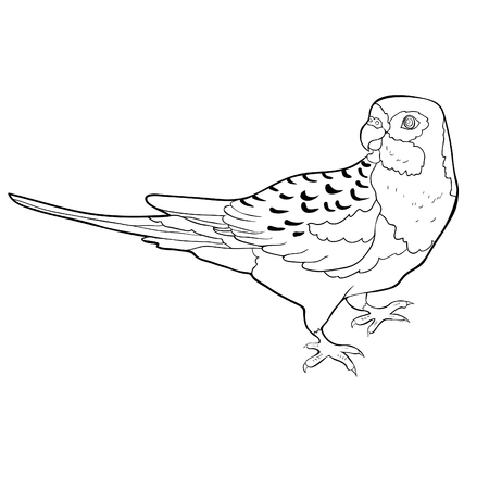 coloring exotic tropics parrot roseella  vector illustration  イラスト・ベクター素材