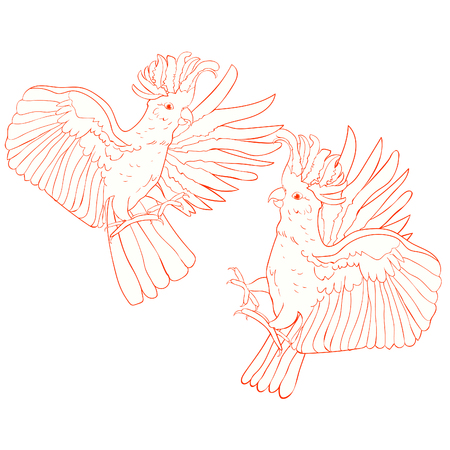 exotic couple  cockatoo parrot pink Inca vector illustration  Illustration