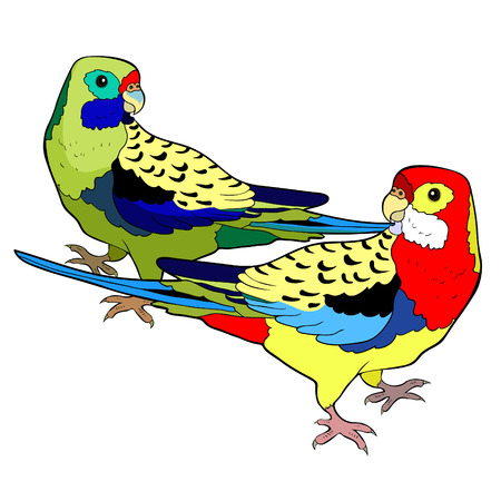 exotic tropics parrot couple roseella green red vector illustration