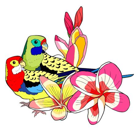 parrot couple roseella green red on plumeria flower vector illustration