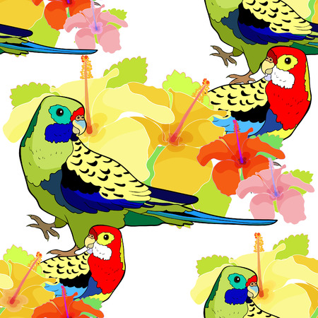 Seamless pattern parrot roseella on hibiscus flower vector illustration. Illustration